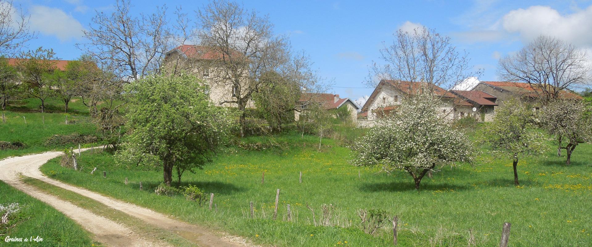 Graines de l'Ain - Village de Sonthonnax-la-Montagne