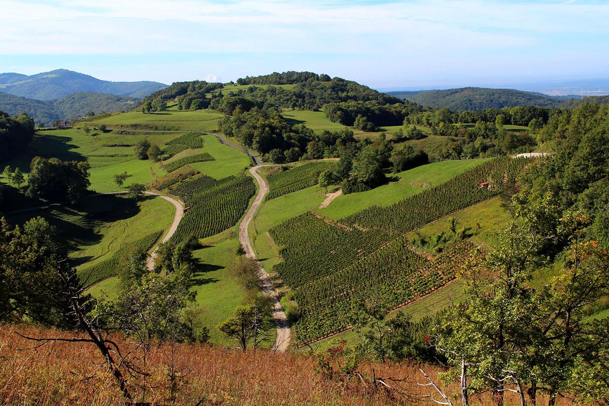 Graines de l' Ain - Domaine Boccard - Ain